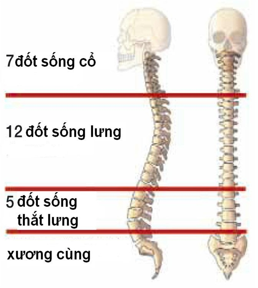 dot-song-lung